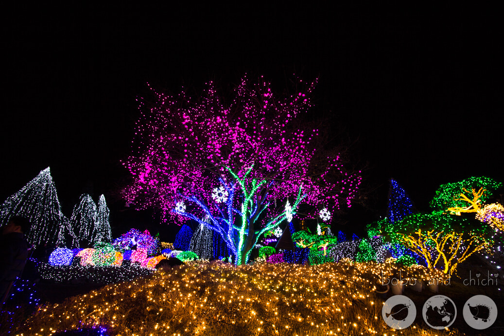 Cheongpyeong Lighting Festival Seoul Tree at night