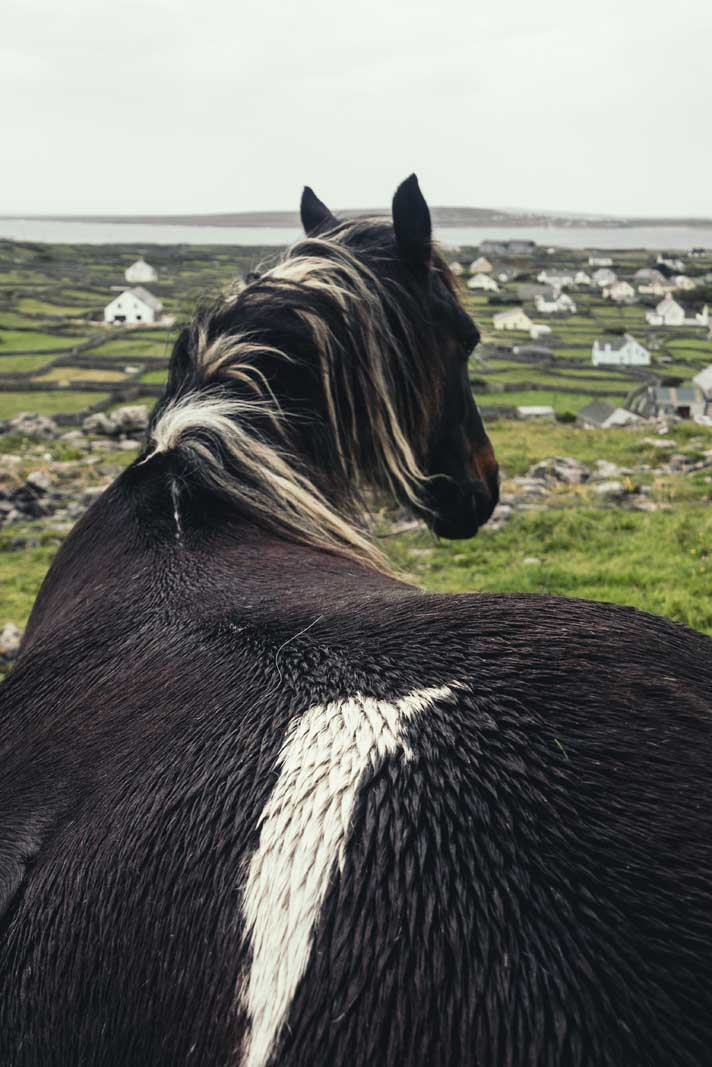 Horse Looking at the view of Inisheer