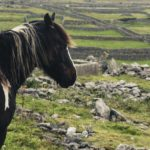 A Day Trip to the Aran Islands - Inisheer