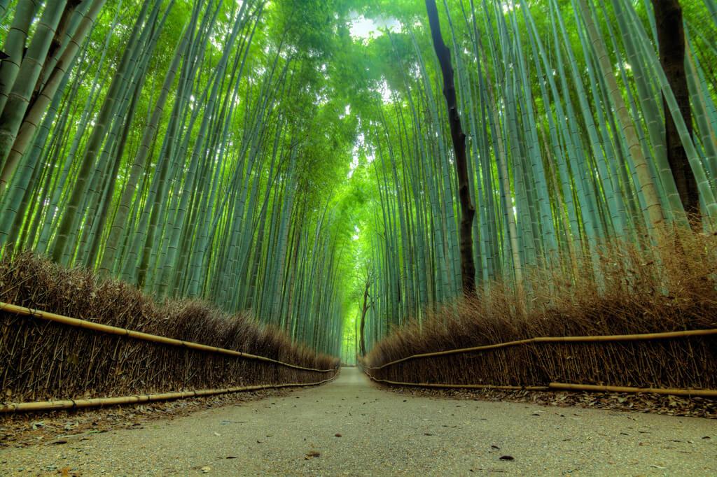 Shot from ground up of Arashiyama Bamboo Forest