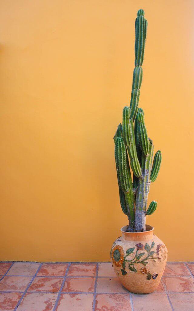 Cactus in Tulum