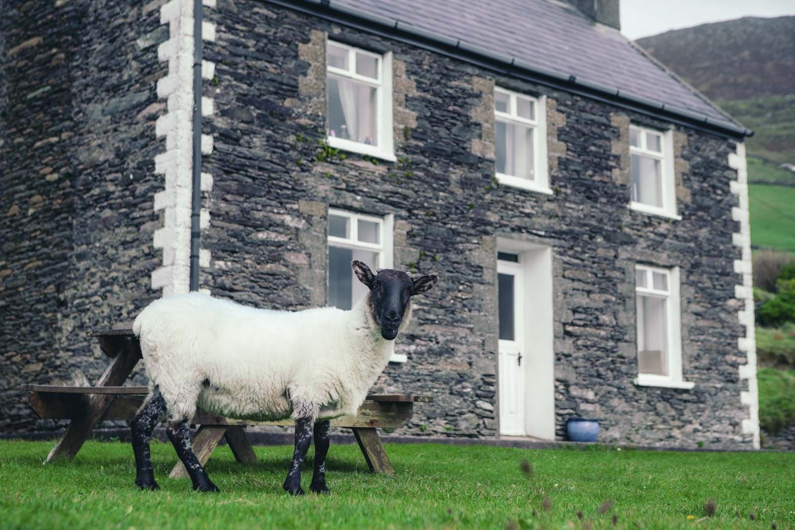 Sheep-at-house-on-slea-head-drive