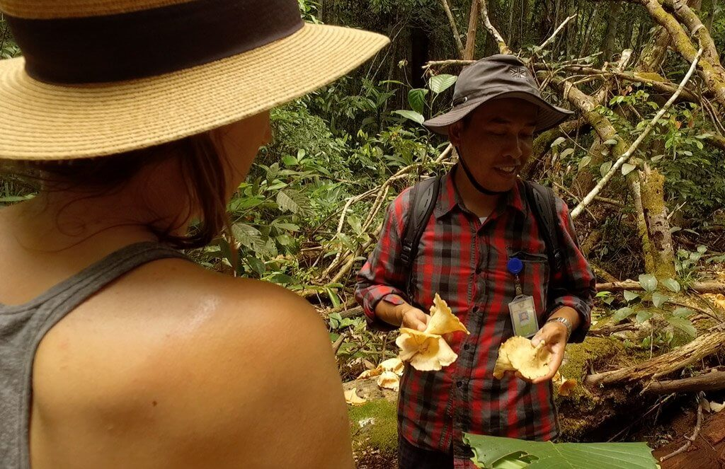 Our guide Chris explaining the medicinal purpose of these plants in the jungle of Borneo