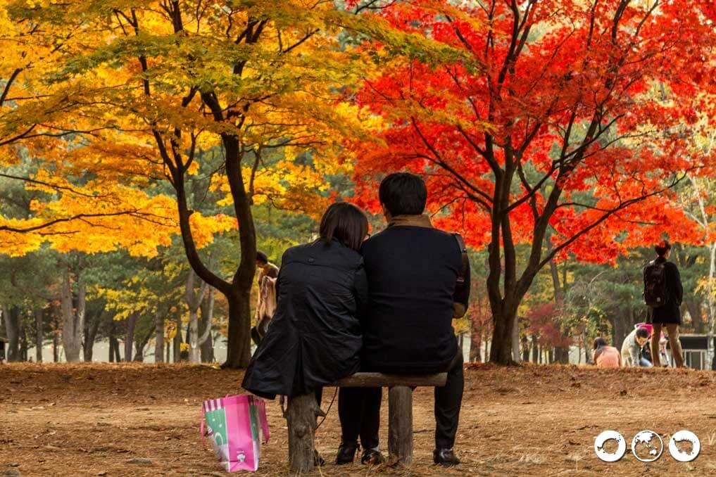 Couple-under-Trees