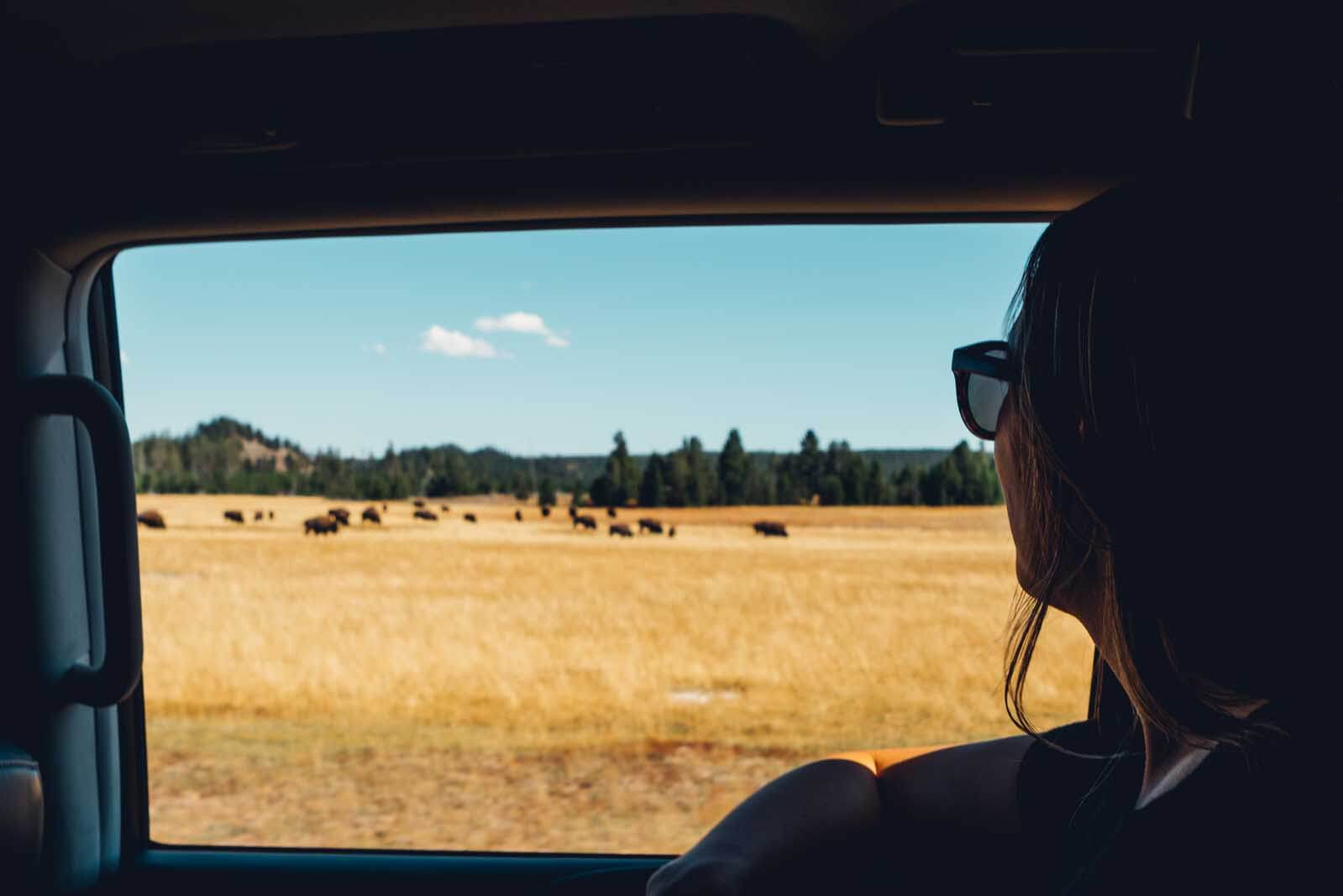 Megan looking out the window of the car driving passed Bison in Yellowstone National Park