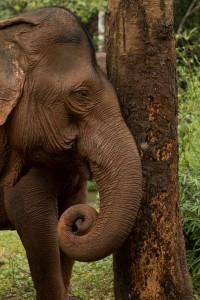 Elephant-Head-Rest