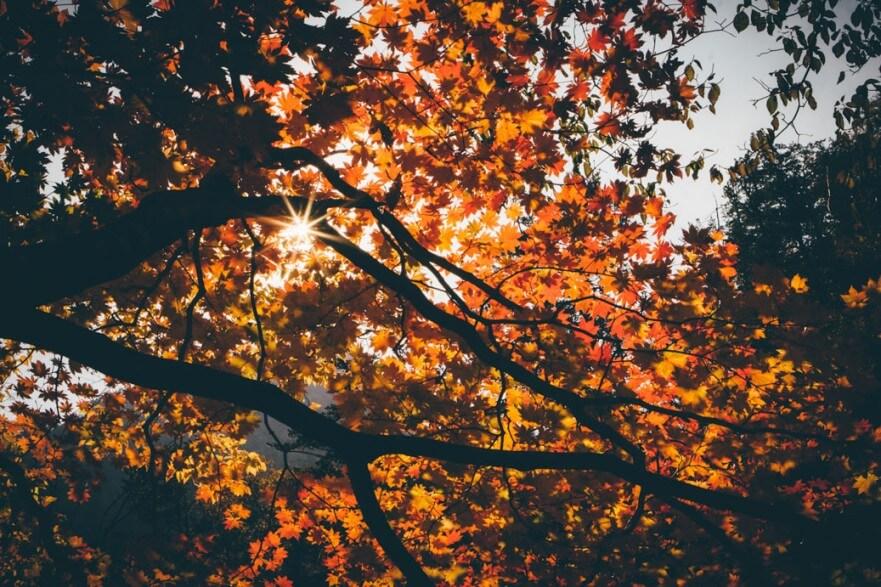Seoraksan During Fall Leaves