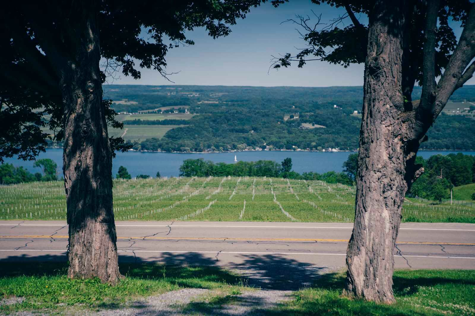 Fulkerson Vineyard View of Seneca Lake