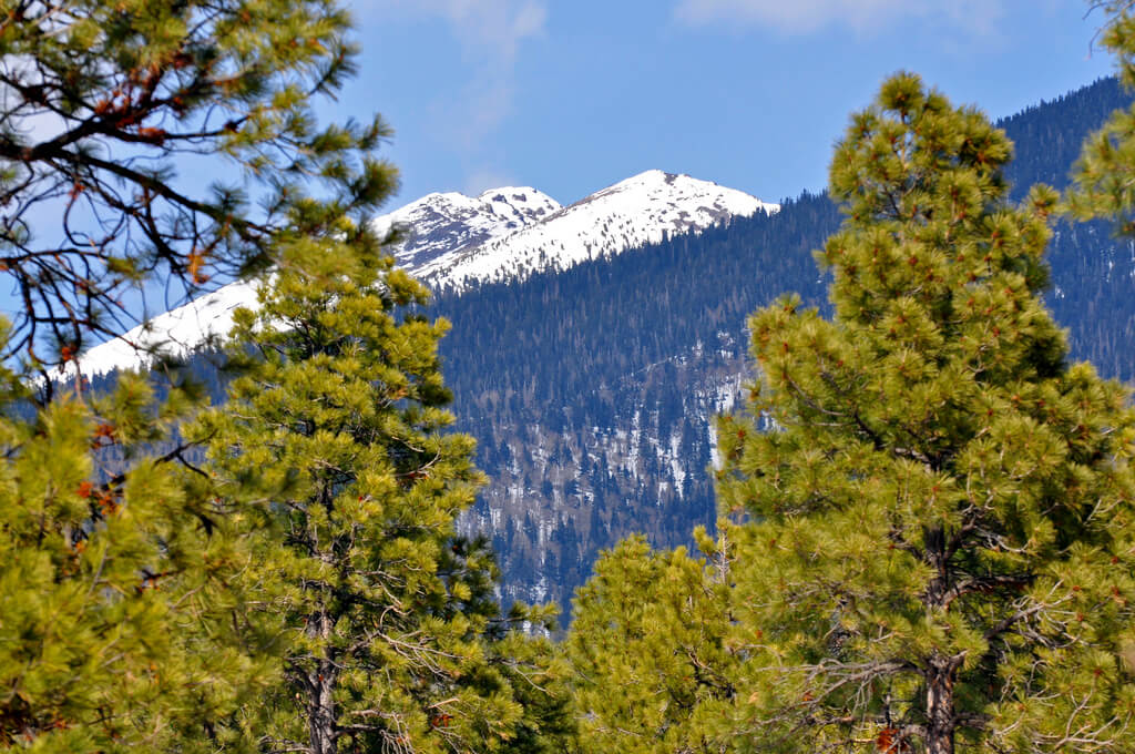 Humphreys Peak at Coconino National Forest