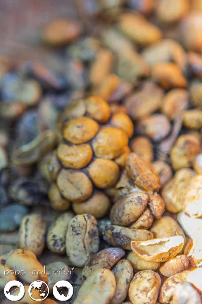 Kopi Luwak Nuts