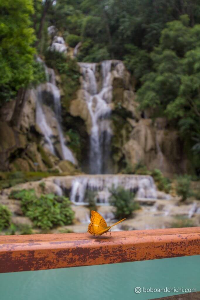 Butterfly at Kuang Si Waterfalls | Best Things to Do in Luang Prabang