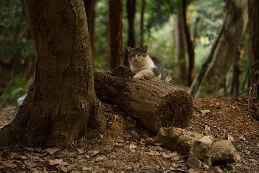 Cat at Fushimi Inari