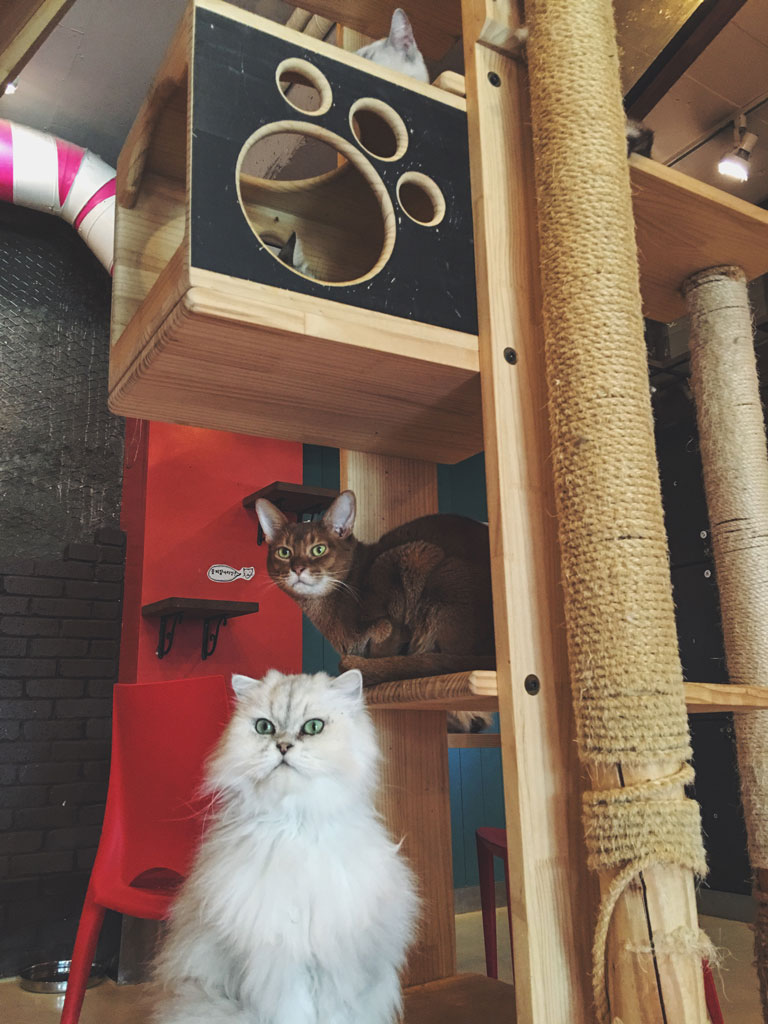 Korea Cat Cafe