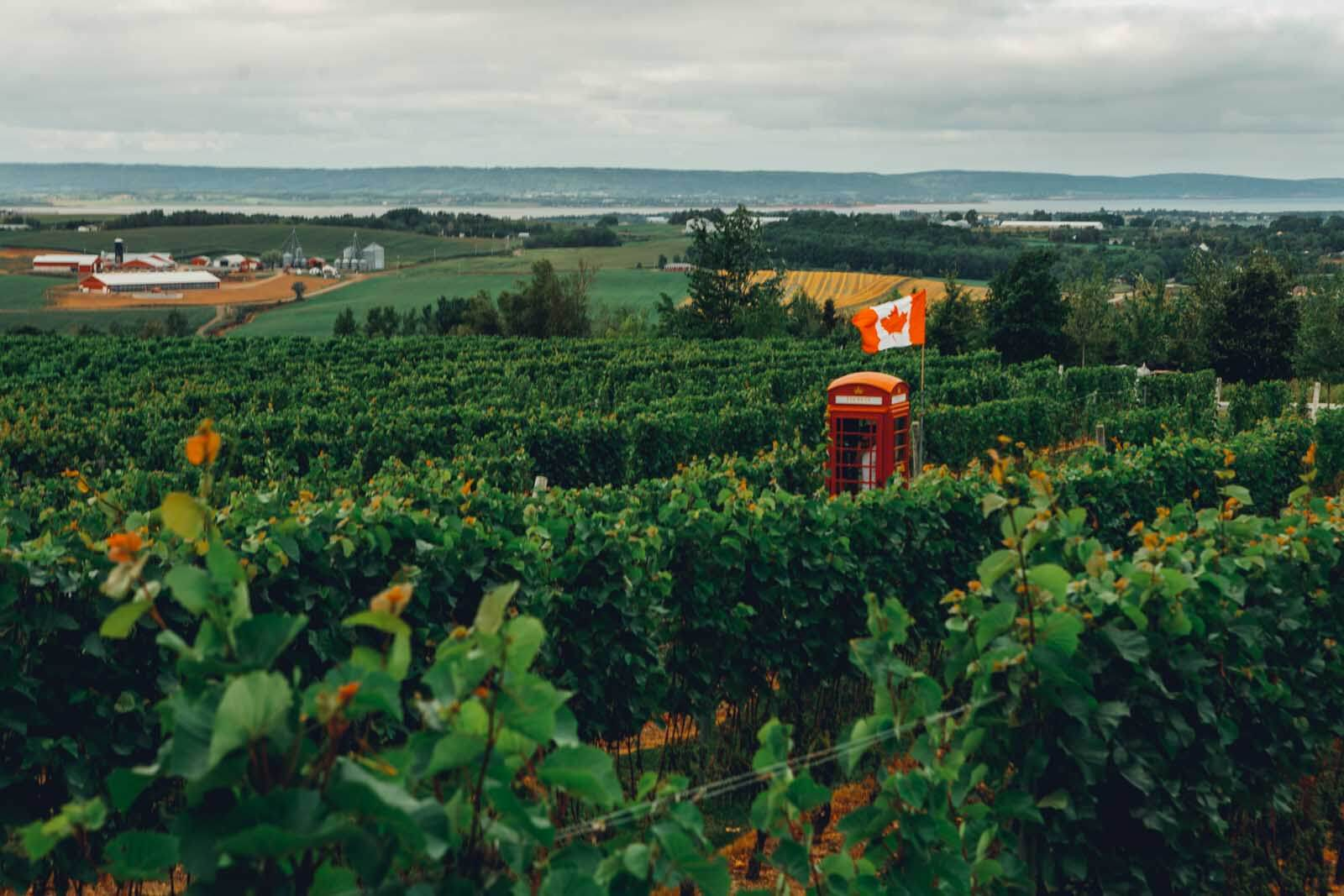 Luckkett Vineyards near Wolfville in the Annapolis Valley of Nova Scotia