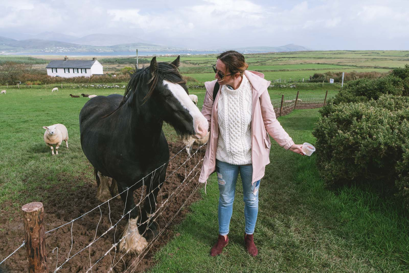 Petting-animals-in-Dingle-Peninsula