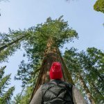More Than Yosemite: Things to do In and Around Yosemite in Tuolumne CA