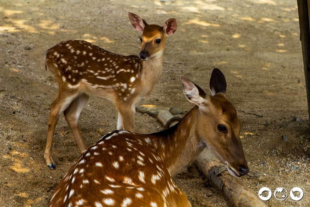 Seoul Forest Bambi