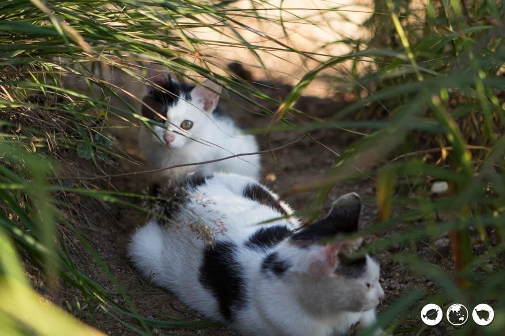 Dobongsan Peak Kittens