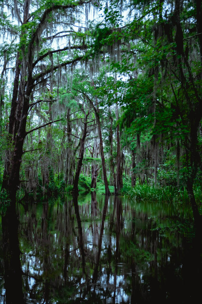 Honey Island Swamp New Orleans