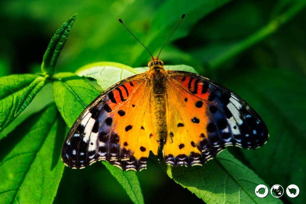 Seoul Forest Butterfly Garden