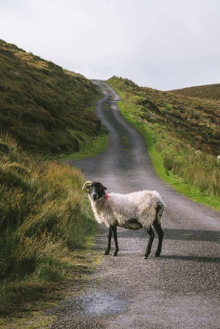 King-of-the-road-Dingle-Ireland