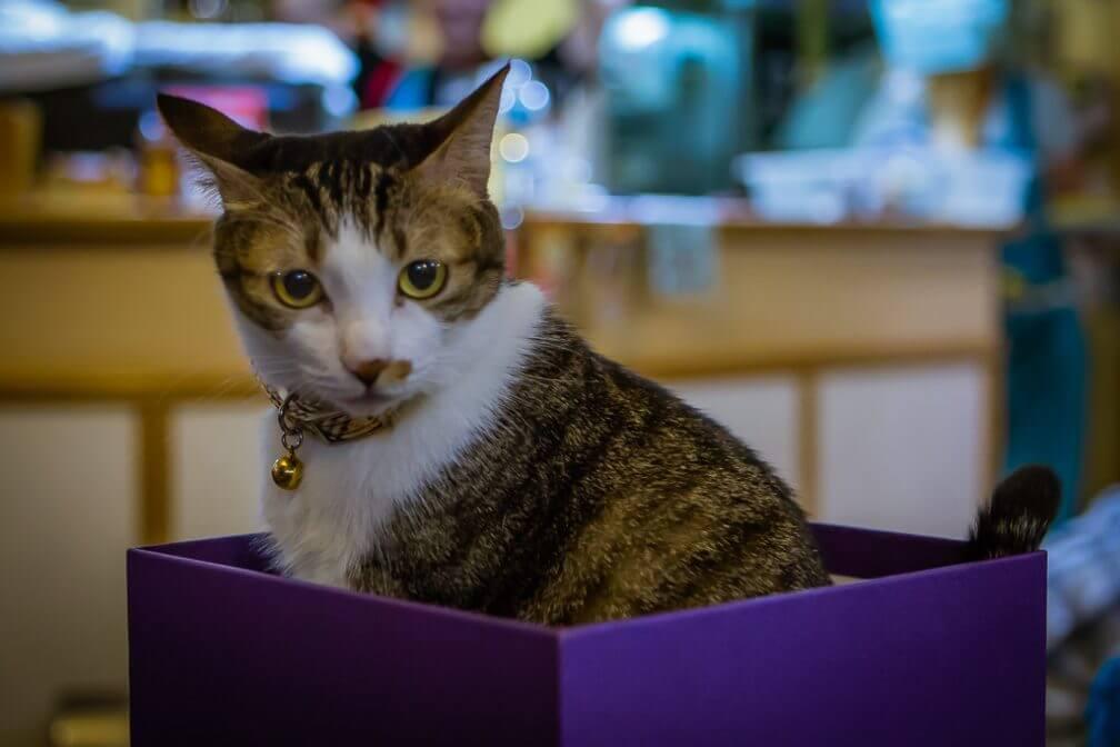 Taipei Cat Cafe