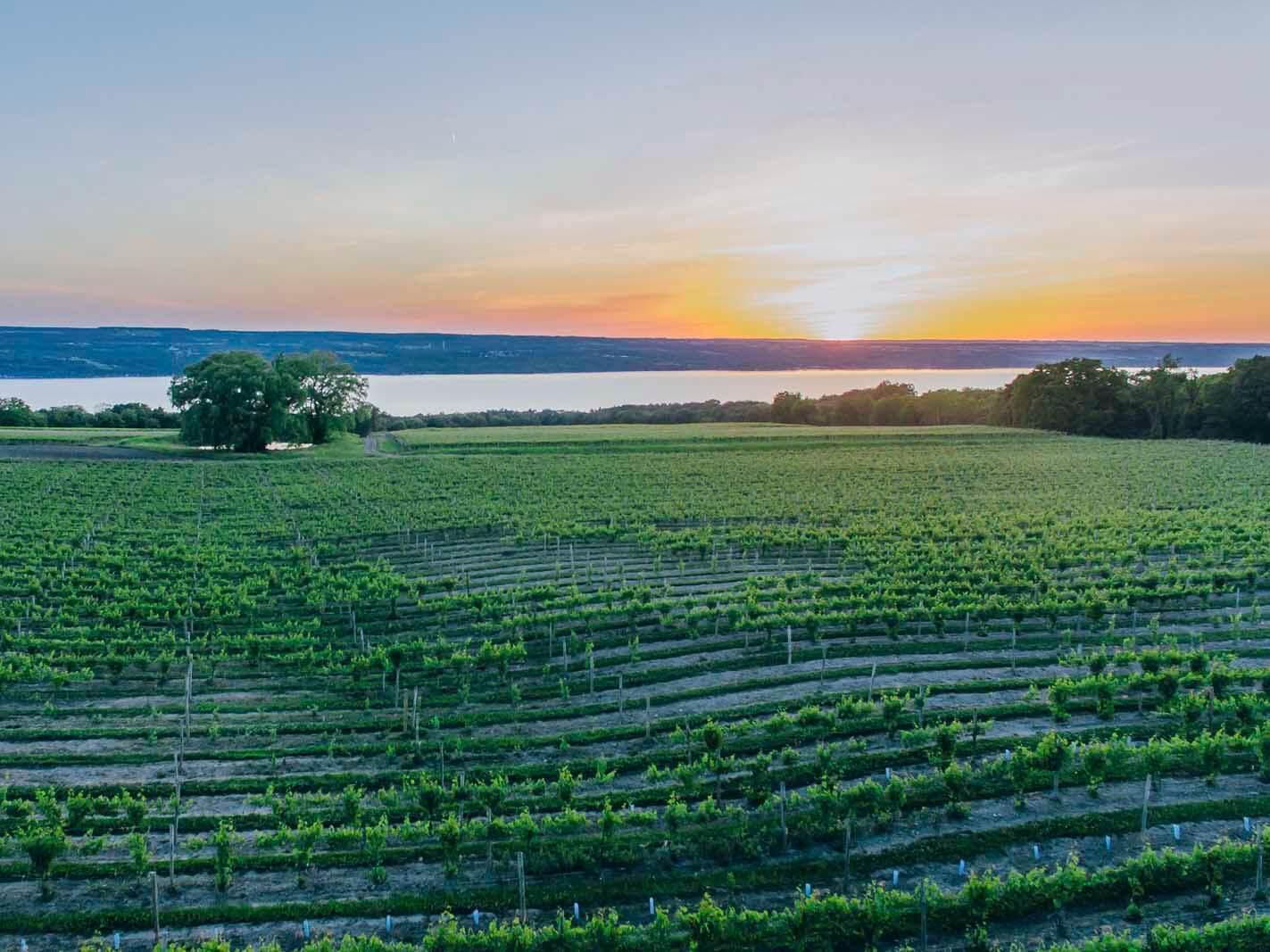 View of Seneca Lake and Vineyard in Lodi New York at Wagner Vineyards