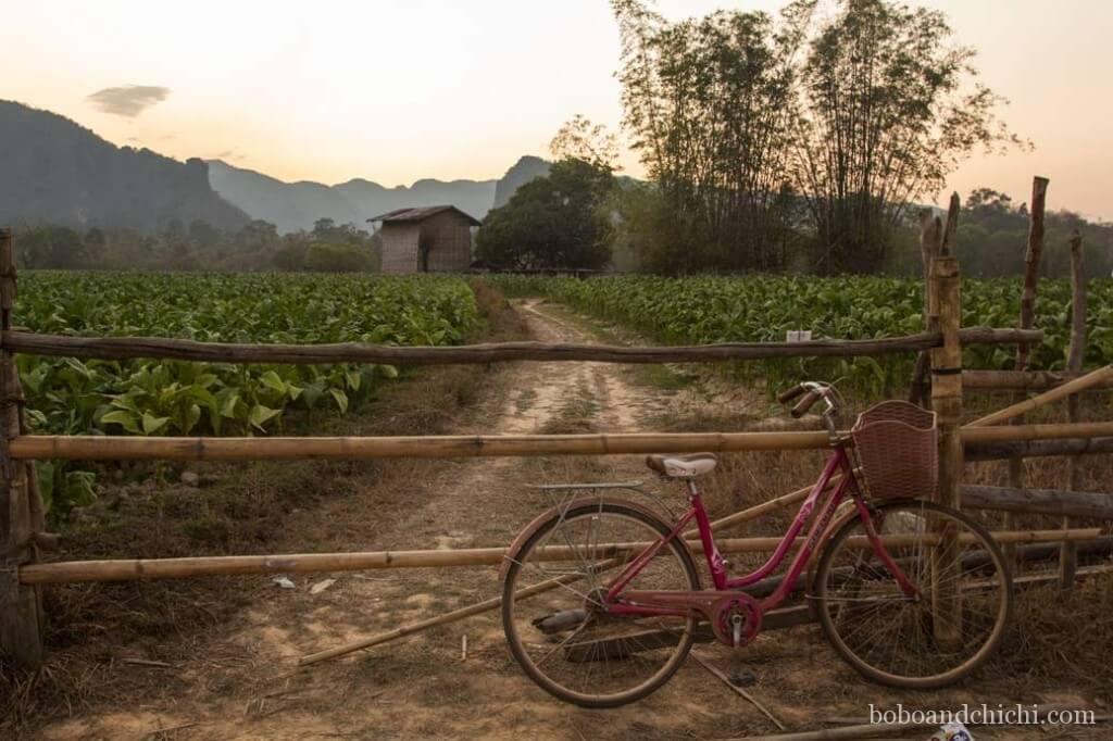 Kong Lo Field in Laos