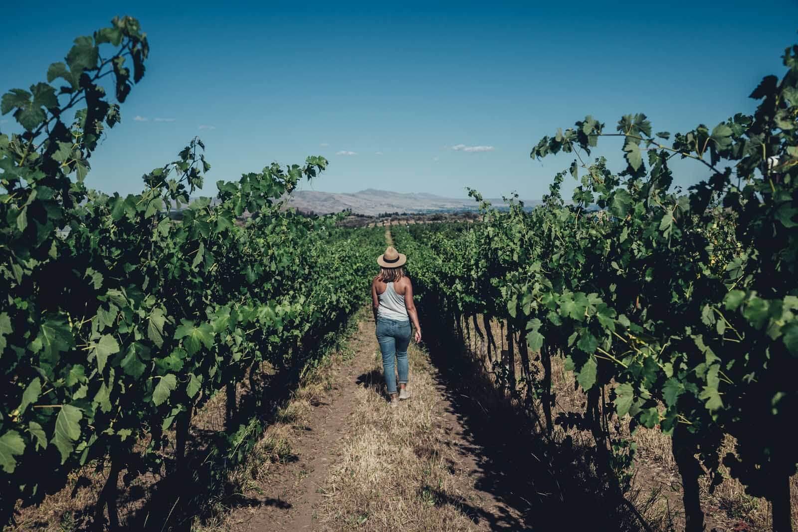 Hike up to Wildridge Winery