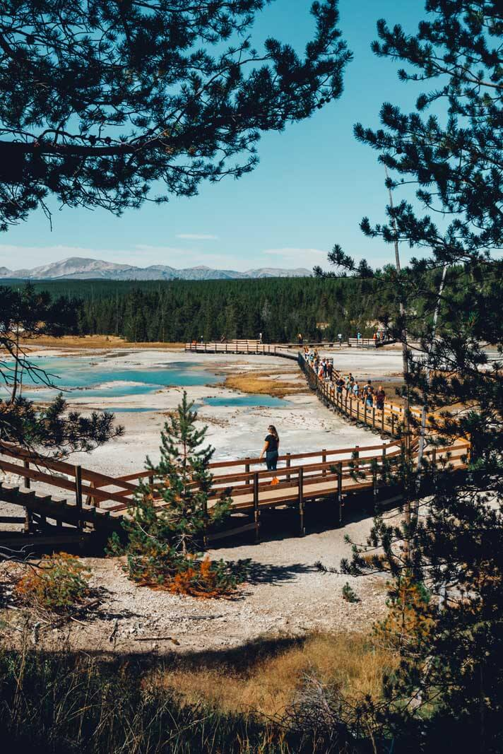 along the wooden boardwalk at Norris Geyser Basin in Yellowstone
