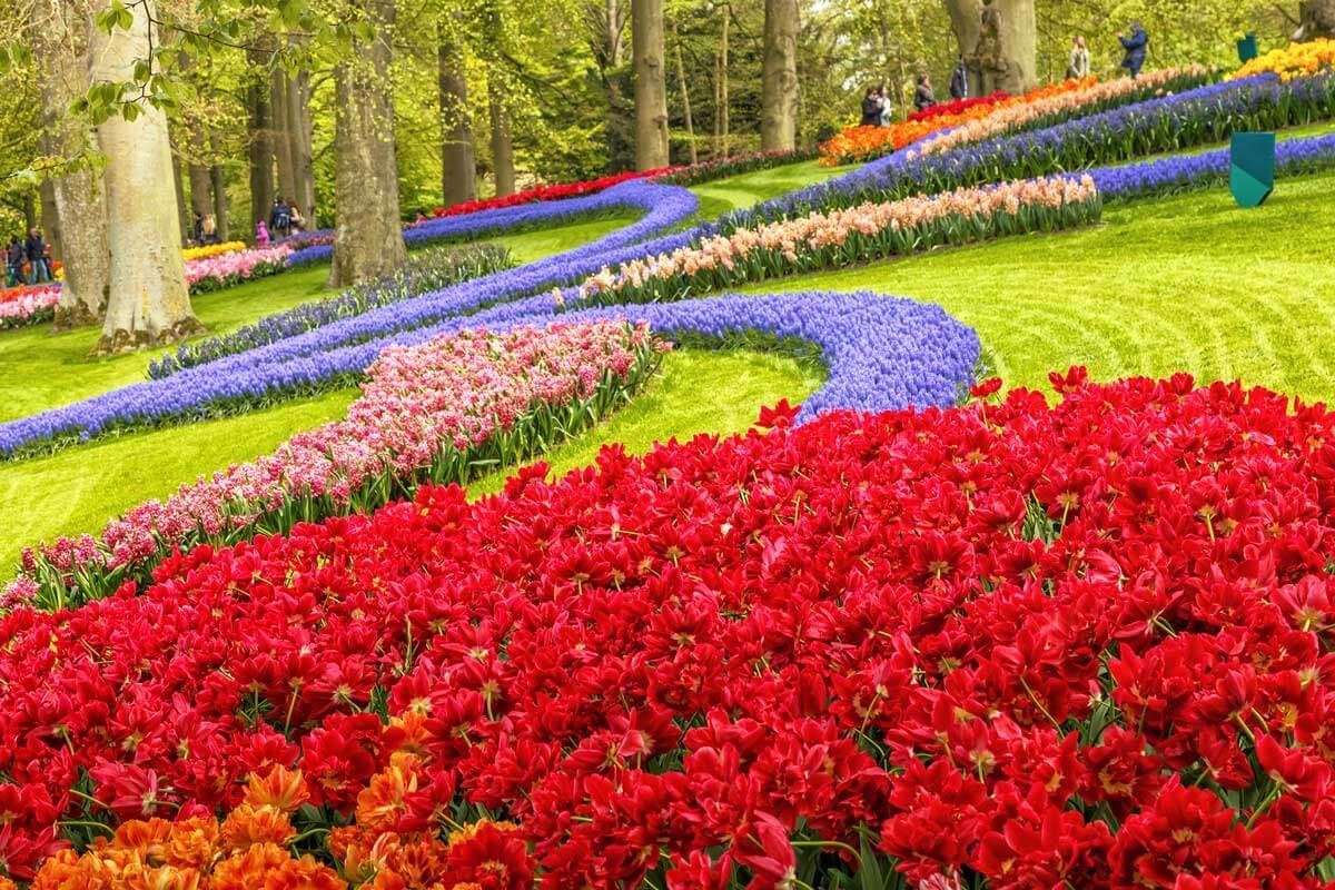 blooming-flowers-in-keukenhof-park-in-the-netherlands-near-amsterdam-Q3ZTLR2
