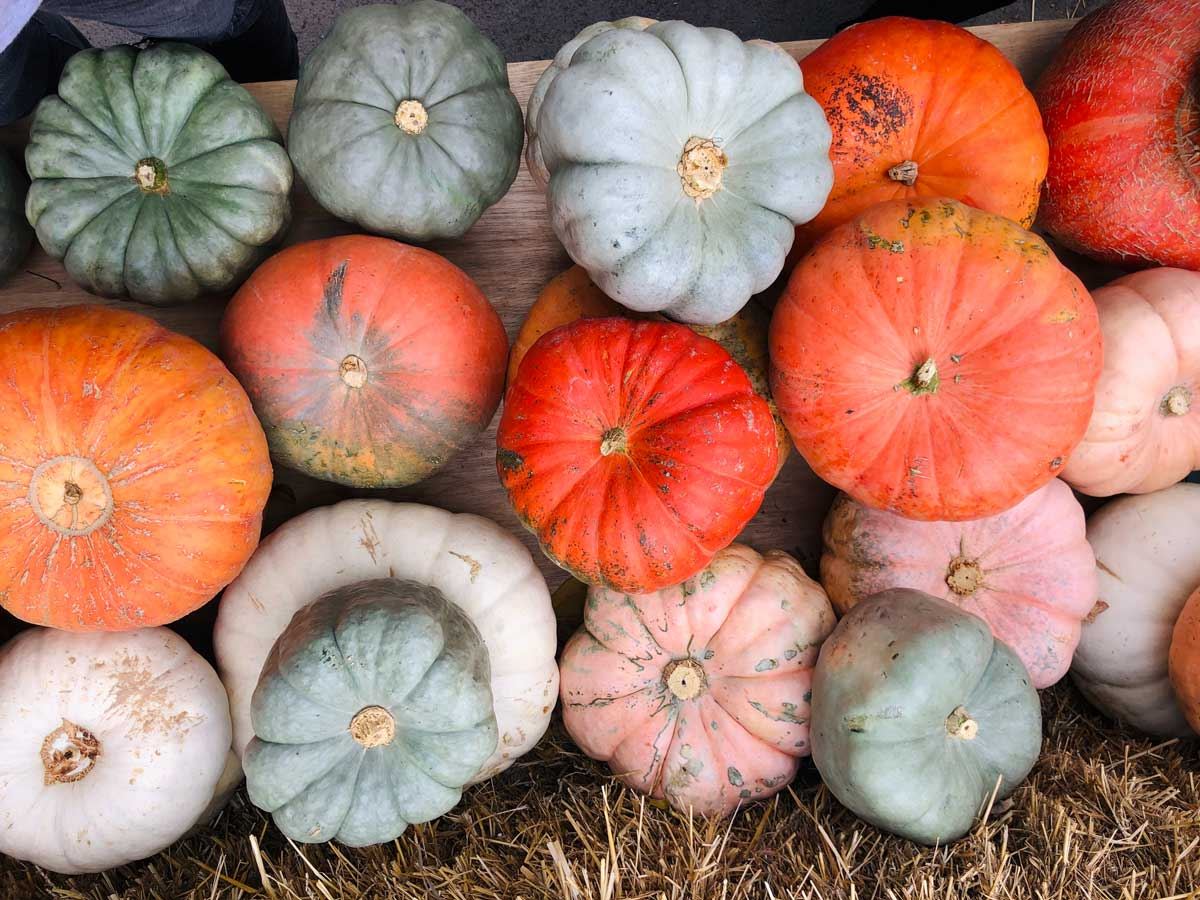 colorful-pumpkins-at-Joesphs-Wayside-Market-in-Naples-New-York-Finger-Lakes