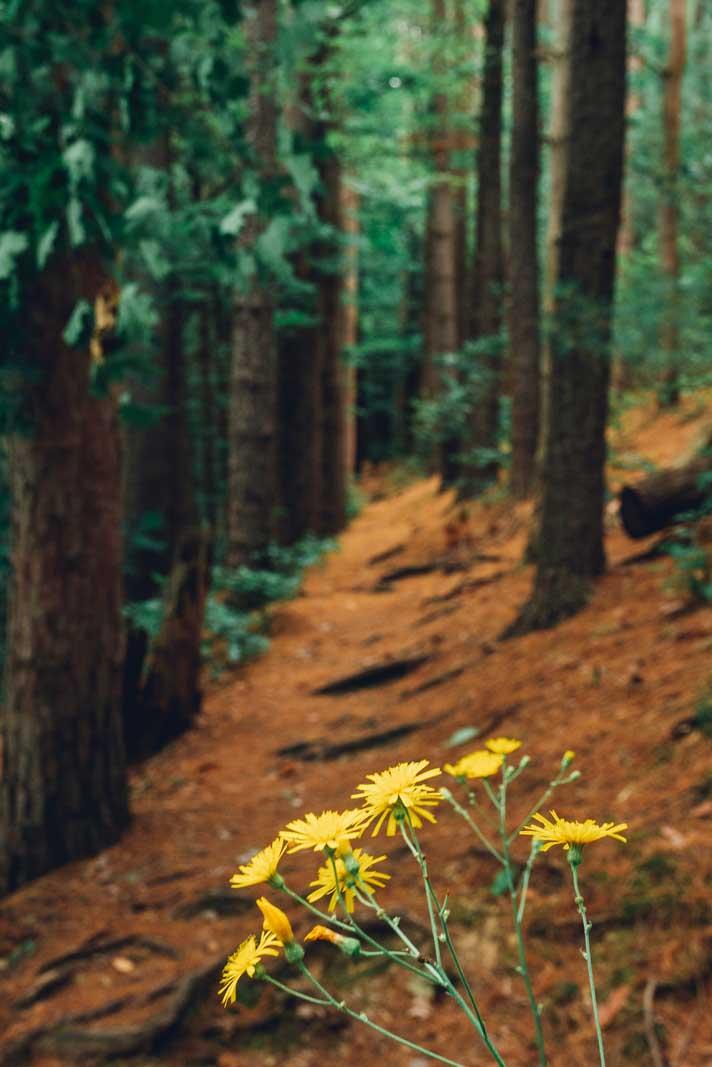 a hike through waverly glen in New York near Owego
