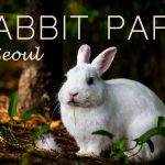 Rabbit Park in Seoul, the Perfect Picnic Place