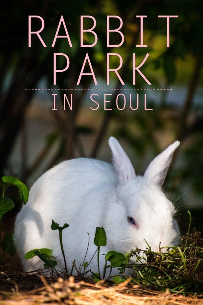 Rabbit Park in Seoul